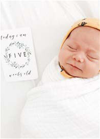 Queen Bee Unisex Baby Milestone Cards in Evergreen Design by Blossom & Pear